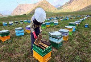 معاون بهبود تولیدات دامی جهاد کشاورزی گیلان از تولید حدود ۵۹۰۰ تن عسل در سال ۹۸ در این استان خبر داد