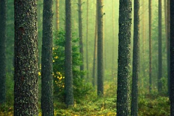 ضرورت نجات جنگلها٫ هيرکانی و کوه دماوند