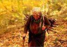 جنگل و اشتغال پایدار؛ میراث باستانی زنان