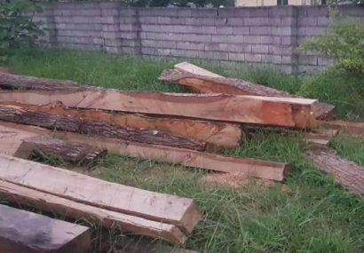 کشف ۴۰ تن چوب جنگلی قاچاق در اطاقور لنگرود